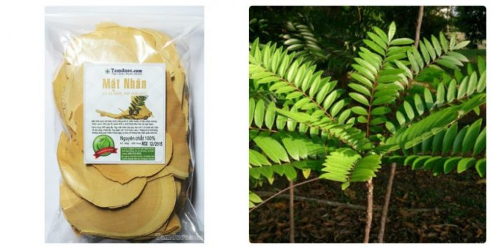 Bảo quản cây mật nhân bằng túi kín, lọ và để nơi khô ráo, thoáng mát