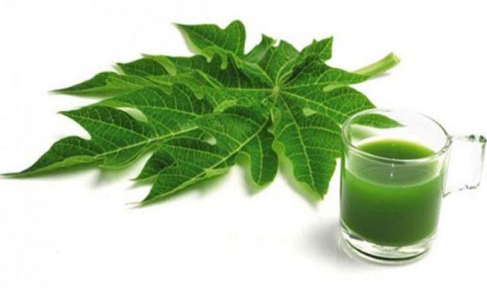 Nhựa trong lá, thân, rễ cây đu đủ có chứa các chất giúp điều trị ung thư gan