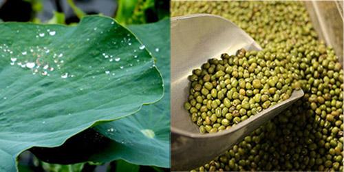 Cháo lá sen đậu xanh rất giàu dinh dưỡng