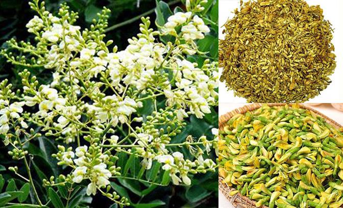 Công dụng cách dùng của hoa hòe là gì và hoa hòe có tác dụng phụ không