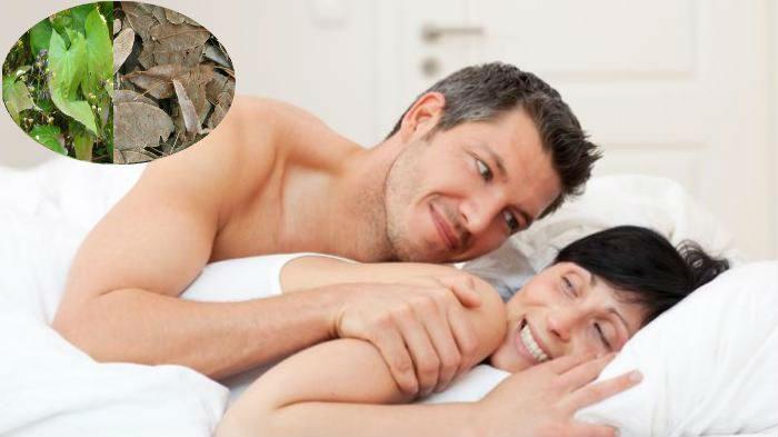Cây cỏ dê có tác dụng tăng cường nội tiết nam nữ rất tốt