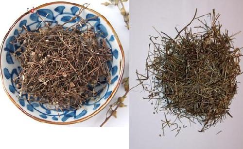 Cây bạch hoa xà thiệt thảo khô có tác dụng chữa bệnh hiệu quả