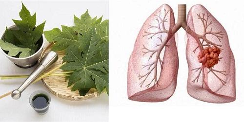 Lá đu đu chữa ung thư phổi có khỏi không?