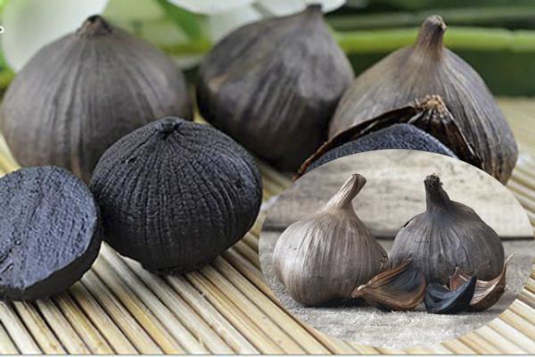 Tỏi đen được cải tiến từ những công dụng chữa bệnh của tỏi thường