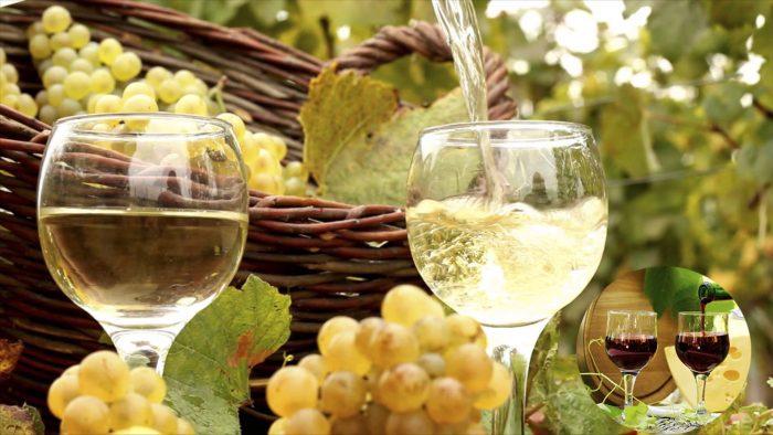 Có nhiều loại rượu nho khác nhau
