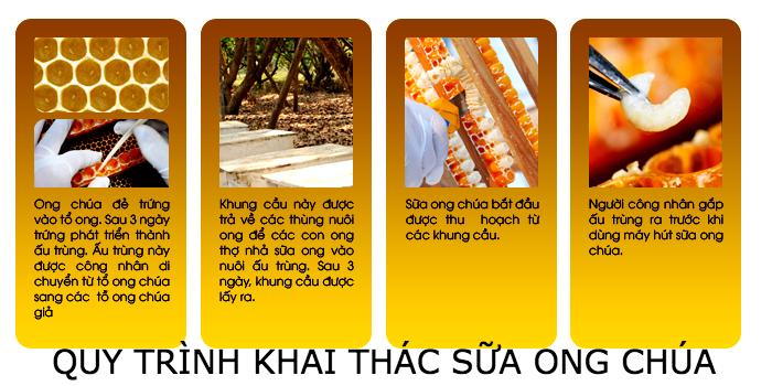 Dựa trên tập tính sinh hoạt của loài ong, người xây dựng lên quy trình khai thác sữa ong chúa nghiêm ngặt