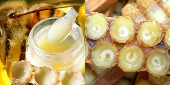 Sữa ong chúa là thức ăn nuôi ong chúa do ong thợ nhả ra từ tuyến họng của nó