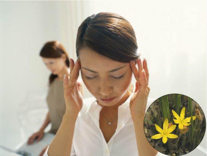 Hoa mắt, chóng mặt có thể là tác dụng phụ của ngải cau