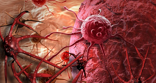 Tế bào gốc ung thư hình thành từ đâu? Quá trình hình thành chúng diễn ra như thế nào?