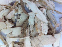 Rễ cây cát căn