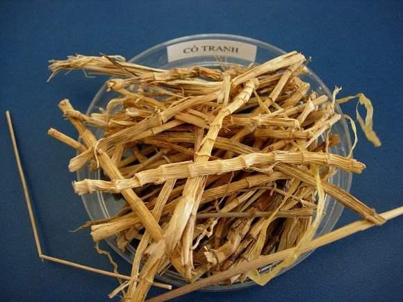 Bạch mao căn là rễ cây cỏ tranh
