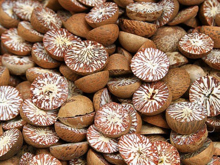 Hạt cau dùng nhiều trong thuốc Đông y