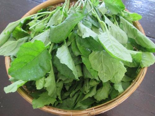 Cải trời là loại rau ăn rất tốt cho sức khỏe