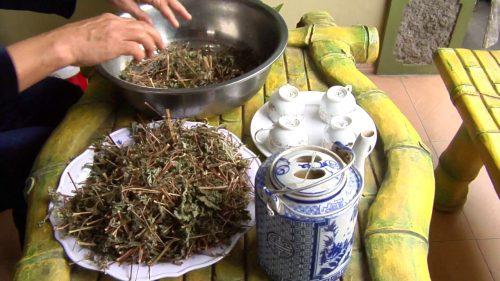 Phơi khô, sao vàng thân và lá cây hy thiêm sau đó sắc lấy nước uống