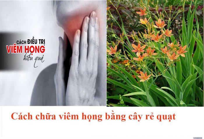 Cây xạ can có tác dụng rất tốt trong việc điều trị viêm họng