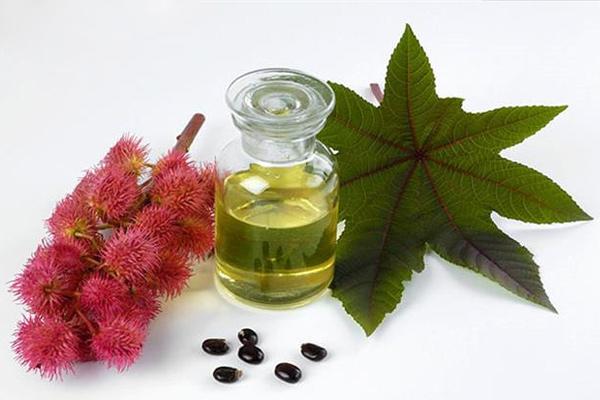 Hạt của loại cây này còn được dùng để ép lấy dầu