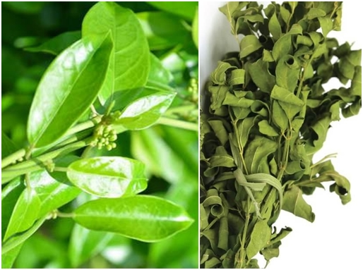 Dây thìa canh có nhiều công dụng nhờ các thành phần dược chất có trong chúng.