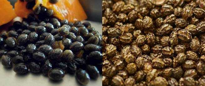 Hạt đu đủ tươi (trái) và hạt đu đủ khô (phải)
