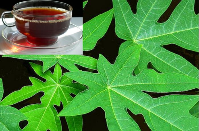 Nước lá đu đủ có tác dụng giảm cơn đau bụng kinh của phụ nữ