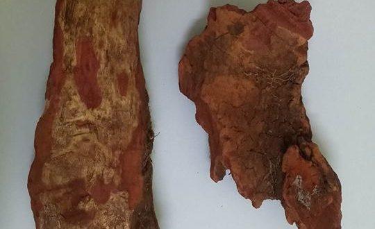 Cây xó nhà khô có chất gỗ màu máu