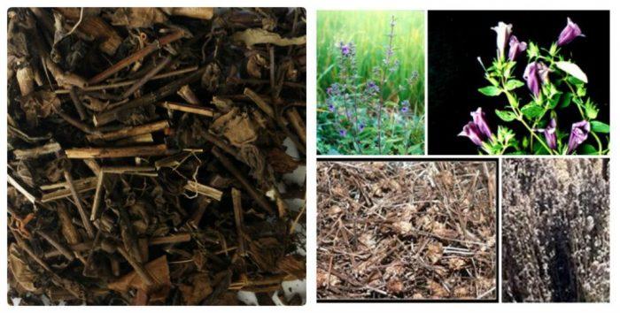 Cây mạo xạ hương có 2 loại