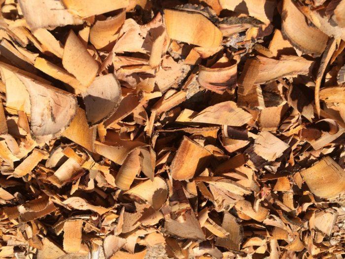 Rễ cây bồ quân khô