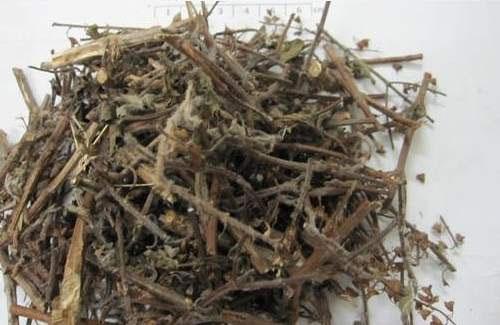 Hương nhu phơi khô có tác dụng chữa bệnh hiệu quả