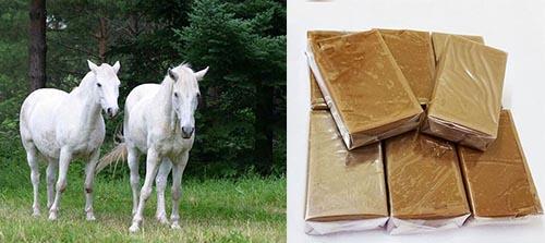 Cao ngựa bạch là chế phẩm từ loài ngựa bạch