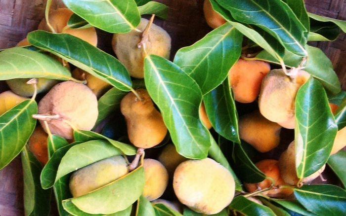 Hình ảnh quả chay ăn trầu