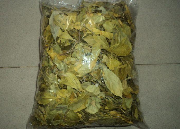 Túi chè dung phơi khô được bán trên thị trường