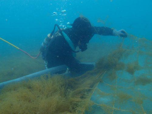 Thu hoạch tảo nâu tại vùng biển Okinawa Nhật Bản