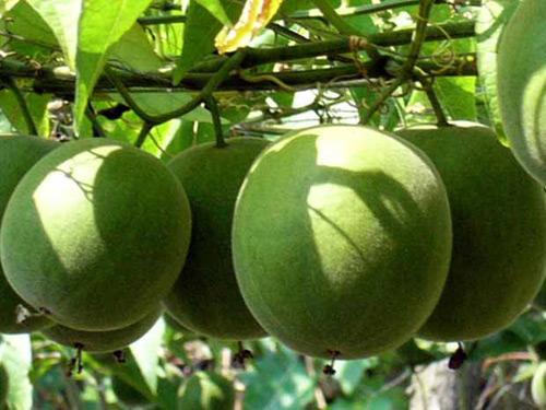 Hình ảnh cây la hán