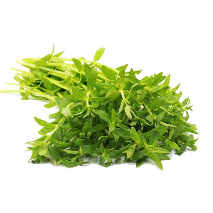 Ngò thơm dùng trong nhiều bài thuốc Đông y