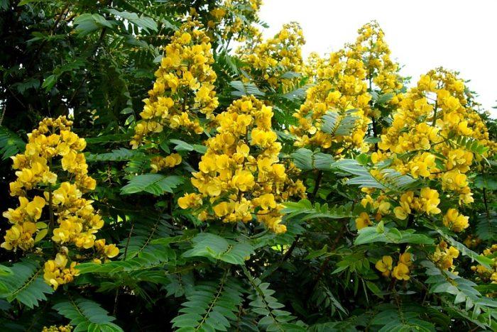 Hoa của cây thường mọc thành chùm