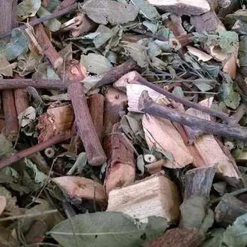 Hình ảnh cây mực phơi khô