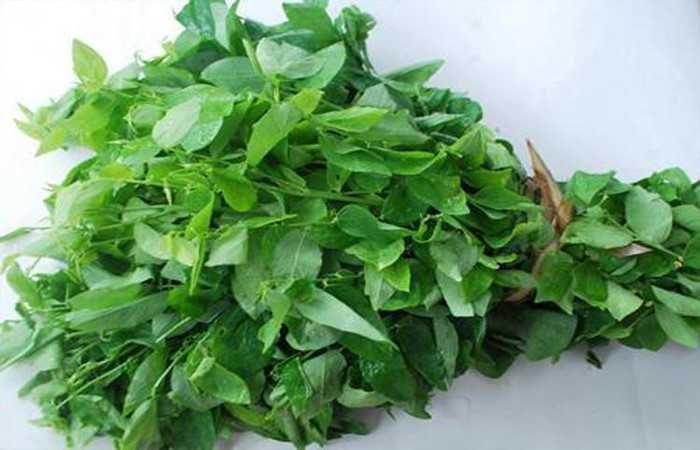 Rau ngót là thực phẩm quen thuộc của các gia đình Việt Nam