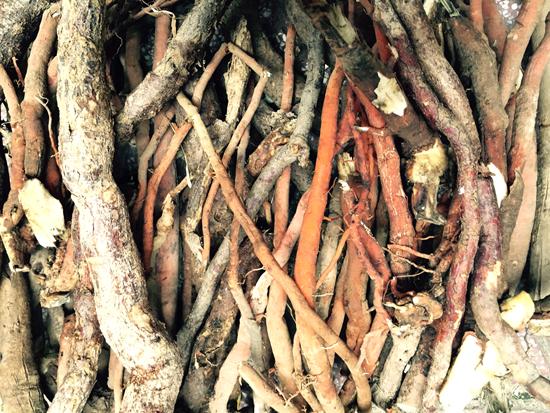 Rễ cau được đào tự nhiên vẫn còn rất tươi