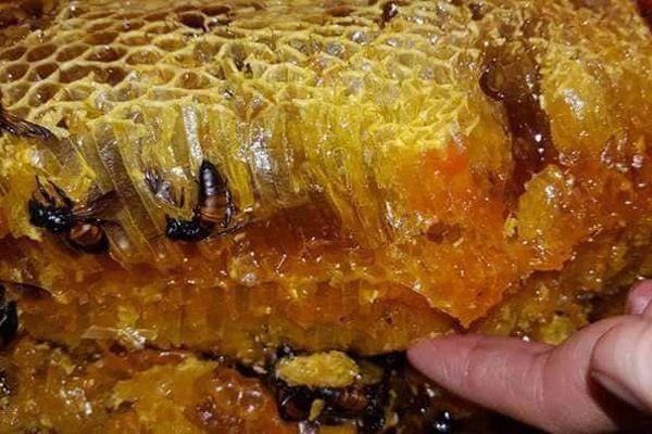 Hình ảnh sáp ong