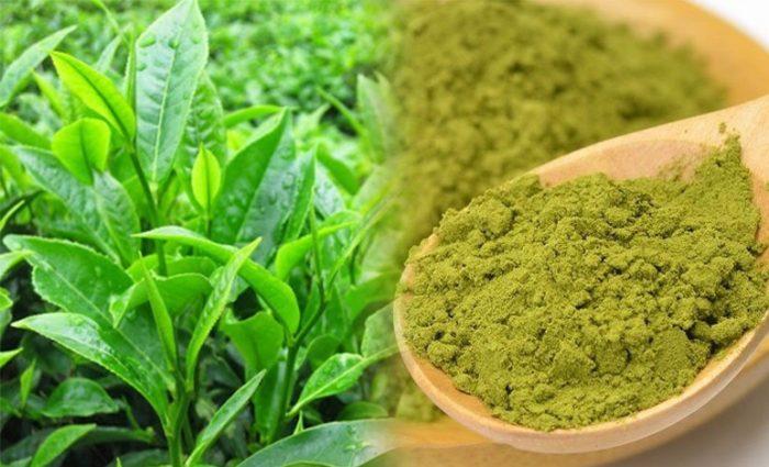 Tác dụng cách dùng bột trà xanh và giá bán bột trà xanh bao nhiêu