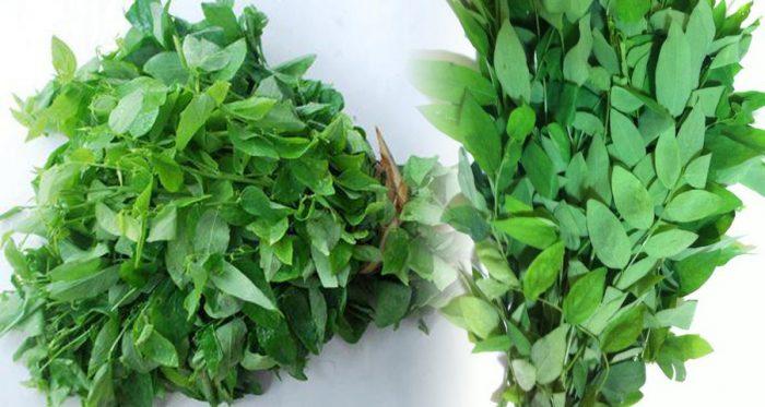 Tác dụng của cây rau ngót là gì và cách dùng cây rau ngót chữa bệnh