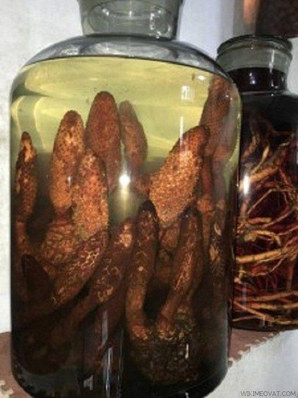 Tỏa dương được dùng để ngâm rượu