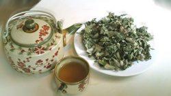Có thể phơi khô cây mã đề để dùng làm trà
