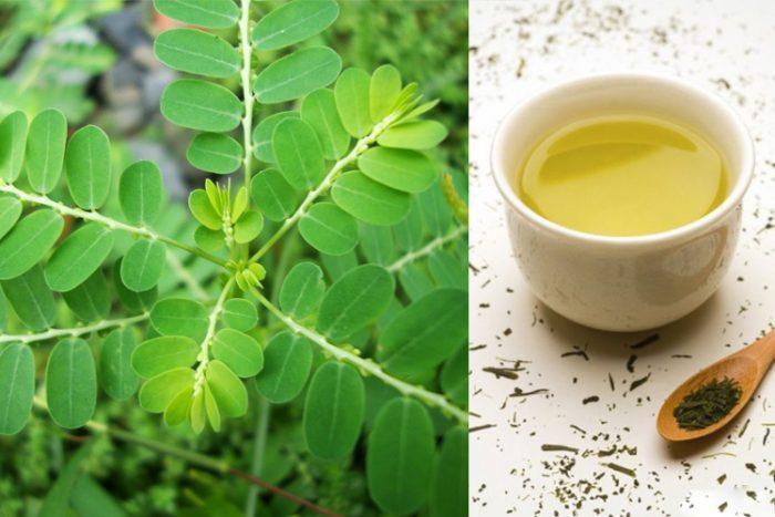 Uống trà cây chó đẻ hằng ngày giúp mát gan, giải độc
