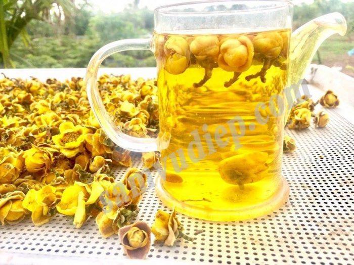 Kim hoa trà có nhiều tác dụng với sức khoẻ, đặc biệt chống ung thư