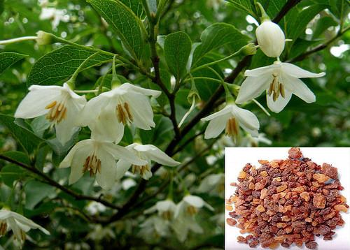 Túc hương có công dụng đặc biệt với sức khỏe và giá túc hương chuẩn