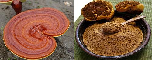 Cách dùng nấm linh chi tán bột để uống hàng ngày