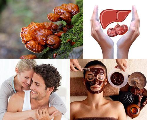 Tác dụng của nấm linh chi đối với sức khỏe con người