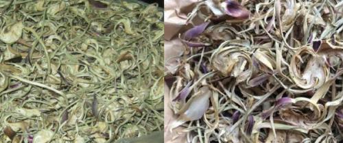 Hoa actisô có thể dùng tươi hoặc khô đều được