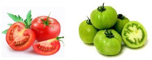 Hình ảnh quả cà chua chín (trái) và khi còn xanh (phải)