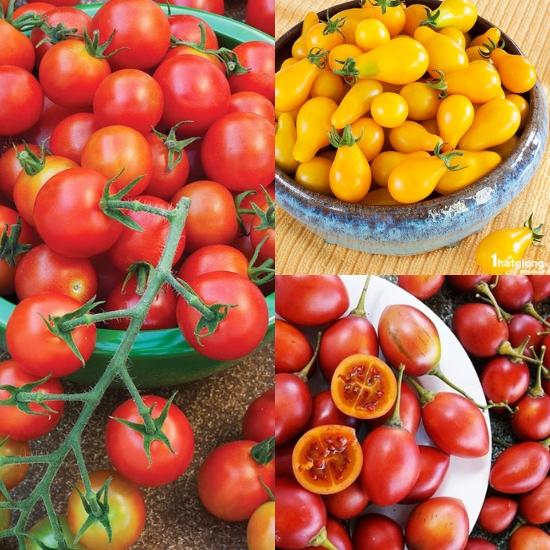 Các loại cà chua phổ biến